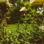 Rodzaje siatek na krety – podobieństwa i różnice